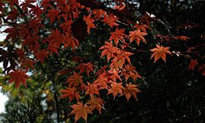 09oosima5.jpg