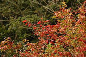 桑取りの秋