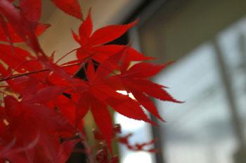 山形の秋 紅葉