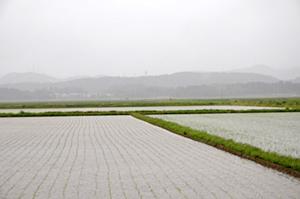 雨の日の田んぼ
