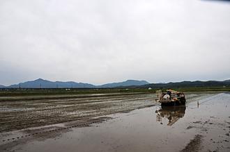 鴨田の田植え