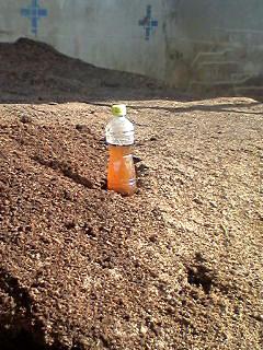 土つくりと堆肥と有機栽培