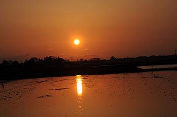 代掻きと夕陽