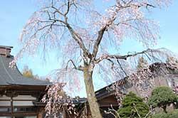 hanagasaki1.jpg