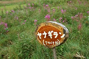 14nozawarihuto2.jpg