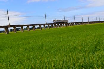 17simazuhikari2.jpg