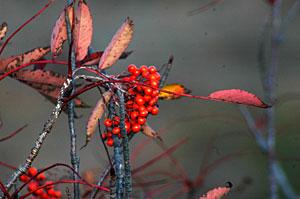 白根山の秋