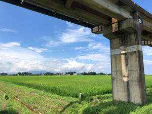 21hirugao2.jpg